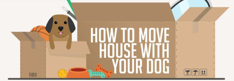 How to Make Moving Stress-Free for Your Dog
